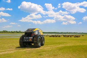 Sherp Pro on a Field of Horses